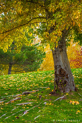 Autumn at Community Park (James Neeley) Tags: idahofalls communitypark autumn fallcolor jamesneeley