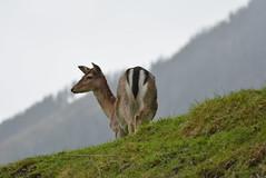 DSC_3873 (d90-fan) Tags: rauris raurisertal natur alpen salzburgerland sterreich nationalpark npht hohe tauern wandern krumltal seidlwinkeltal