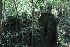Longhushan, Guangxi/ 3924 (Petr Novk ()) Tags: longhushan  longancounty   china na  guangxi  asia asie  naturereserve nature forest karst   rock  plant rostlina tree strom