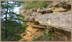 <> Brady's Bluff Study - I. <> (Wolverine09J ~ 1 Million + Views) Tags: perrotspwisc16 bradysbluff statepark landscape scenic autumn wisconsin greenfoliage escarpment nature rockface fantasticnature ilovemypics