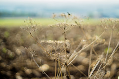 Filigree of Silk Path (*Capture the Moment*) Tags: 2016 autumn bokeh bokehleicalenses bubblebokeh bubbles dof deutschland frnkischeschweiz germany herbst leicasummiluxm leitzsummiluxm1450 leitzleica sonya7m2 sonya7mii sonya7ii bokehlicious landschaft landscape outdoor plant pflanzen