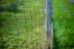 Autumn Fence (*Capture the Moment*) Tags: 2016 autumn bokeh bokehleicalenses dof deutschland fence frnkischeschweiz germany herbst leicasummiluxm leitzsummiluxm1450 leitzleica metal metall sonya7m2 sonya7mii sonya7ii zaun bokehlicious hff fenced friday happyfencedfriday fencedfriday outdoor