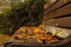 Autunno; le foglie si riposano.... (Pistolozzi Marco) Tags: canoneos700d foglie autunno coloridautunno panchina riposo reminder trees ottobre