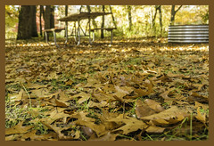 Sleeper State Park, Michigan (TAC.Photography) Tags: camping picnictable oakleaves fall autumn fallcolor michiganphotography michiganpark michiganwoods sleeperstatepark