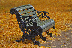 Vorrei che fossi qui / Wish you were here (Regent's Park, London, United Kingdom) (AndreaPucci) Tags: autumn london uk bench regentspark lonely leaves pinkfloyd wishyouwerehere andreapucci canoneos60