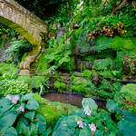 All Green at Hever Castle thumbnail