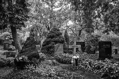Friedhof Alt-Schneberg (Berlin-Knipser) Tags: berlin schneberg deutschland germany bw blackwhite blackandwhite artinbw schwarzweis schwarzweiss sw friedhof cemeteries