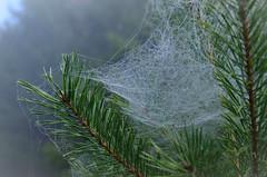 20161030-WOL_7733.jpg (viennalinux) Tags: spaziergang nebel herbst nature tauern fog natur ossiach ossiacher