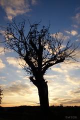 blue (leaving-the-moon) Tags: 201610 autum baden baume colors deutschland germany goodlight hebst himmel kraichgau natur nature season sky sonnenuntergang sundown wolken