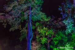 20161029-IMG_9291 Tree Compton Verney Warwickshire.jpg (rodtuk) Tags: phototypes 80d plant england nature b24 warwickshire comptonverney midlands places uk kit photographicequipmentused