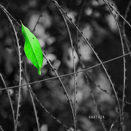 "Life is all about ""Survival""... #nevergiveup #hope #streetphotography #nature #blackandwhitephotography #psedited #crazyaboutphotography #lifequotes"
