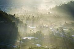 Morning Rays at Pinggan (Pandu Adnyana Photography Tour) Tags: baliphotographytour baliphotographyguide balitravelphotography balilandscapephotography balilandscapetour balilandscape bali indonesia batur mount lake sunrise fog dawn valley pinggan