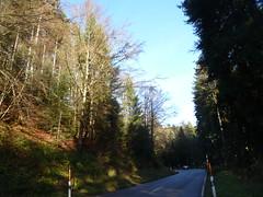 SCHWARZWALD IM HERBST (ehbub@yahoo.de) Tags: schwarzwald tannenbaum laubbaum herbst landstrase hang