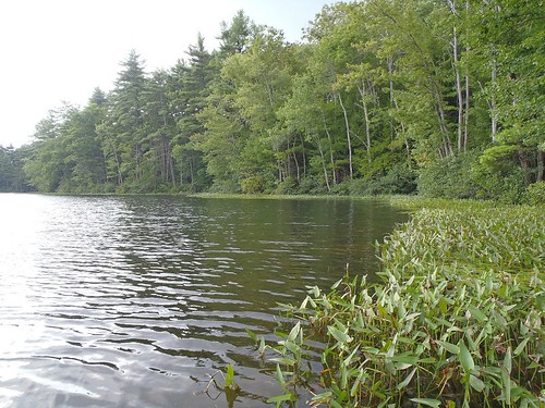 Littlefield Pond - www.amazingfishametric.com