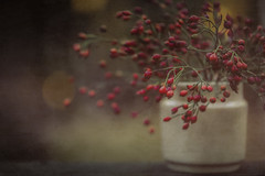 Happy Harvest - Thanksgiving! (jm atkinson) Tags: winter berries maine november still life textures red light depth