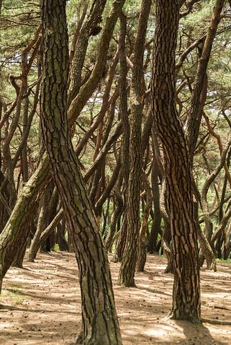 Trees at Namsan Park