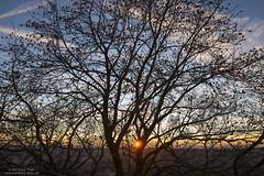 Tree and sunset at Hohenstein (Bernhard_Thum) Tags: bernhardthum thum nature sunset nikond800e distagonotus2814zf otus1428 zf franken hohenstein sunsetlight capturenature elitephotography landscapesdreams