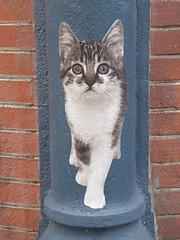 Graff in Paris - Sophie Photo (brigraff) Tags: streetart collage pastedpaper pasteup wheatpast paris sophiephoto sophie photo foto brigraff chat cat katze gato