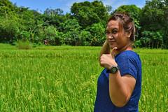 DSC_0114 (2) copy (kenken.marilag) Tags: flower cow rice philippines farming nueva baka palay ecija lupao