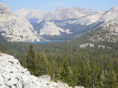 DSC03153 (cwright17) Tags: yosemite olmsteadpoint