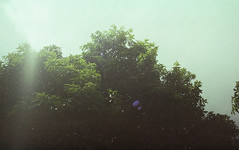 mood (dheri fikriyanto) Tags: camera sun tree analog 35mm indonesia nikon ishootfilm nikonfm10 analogphotography dailyphoto nikonfm agfavista200 analogcamera filmisnotdead dailyshoot filmshooter istillshootfilm believeinfilm buyfilmnotmegapixels