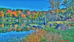 Fall colors and reflections (Anton Shomali - Thank you for over 600K views) Tags: trees red orange usa lake chicago cold green fall nature water colors yellow america reflections season gold us illinois branch branches il itasca fallcolorsandreflections