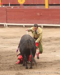 Estocada de Morante en Lima (Vladimir Tern A.) Tags: peru gente lima bulls toros costumbres acho bullfighting bullfighters tauromaquia tradiciones toreros matadores corridasdetoros taurinos plazasdetoros feriataurina culturayarte