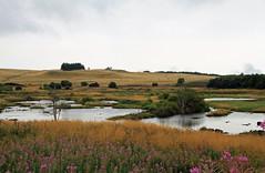 La tourbière (Yvan LEMEUR) Tags: aubrac tourbière épilobes marais marécages lozère aveyron landscape paysage tempsmaussade sauvage france