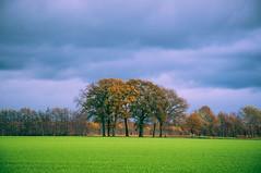 (KJ Photographie) Tags: trees sky orange brown storm tree green grass leaves clouds forest germany deutschland laub herbst meadow wiese himmel wolken grn landschaft wald bume baum acker rheine sturm herbstfarben blumenundpflanzen nikond5000