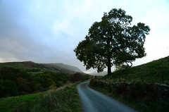 Walking in Northern England {Explored 11/17/2016} (moke076) Tags: ambleside road country lake district northern england tree rural pasture dirt mist fog evening rolling hills nikon d7000 travel vacation hike cumbria nature outdoors autumn fall explore explored flickr