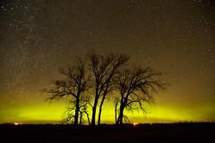 aurora trees, star filled skies (journey ej) Tags: