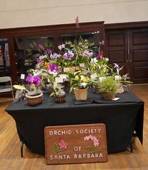 Our society's display (cieneguitan) Tags: lan bunga orkid flowershow okid angrek anggerek