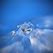 Blue Ice of my Fantasy