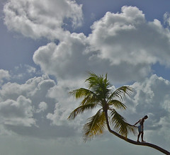 Sur le cocotier de la cte (Pi-F) Tags: martinique ile plage homme cocotier quilibre carabe