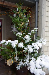 A wet snowfall (kimshand) Tags: christmas winter snow flower home december novascotia ns country decoration wentworth snowing snowfall countrylife wentworthvalley thisishome