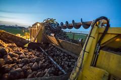 3U4A1615 (Bad-Duck) Tags: vinter mat ropa hst ker betor kvll skrd flt jordbruk lantbruk rstid livsmedel sockerbetor fltarbete livsmedelsproduktion betupptagare