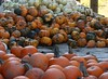 IMG_3552 (Sally Knox Sakshaug) Tags: pumpkin stem orange fall autumn october farm harvest squash outdoors nature sunshine bright white green small tiny accumulation stockpile collection stack display variety different varied round unique mound mass quantity gourd pile many batch lots loads heap field market
