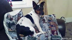Tue, Sep 27th, 2016 Lost Male Dog - Kilteskin, Aghada, Cork (Lost and Found Pets Ireland) Tags: lostdogkilteskincork lost dog kilteskin cork september 2016