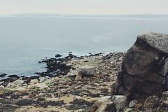Morning view (ManuSotomayor) Tags: sea landscapephotography latinamerica southamerica island landscape view beach isladamas puntadechoros coquimbo chile