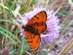 Butterfly 1057 (+360000 views!) Tags: butterfly borboleta farfalla mariposa papillon schmetterling