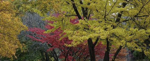 """Autumn scenery • <a style=""""font-size:0.8em;"""" href=""""http://www.flickr.com/photos/52364684@N03/30257228554/"""" target=""""_blank"""">View on Flickr</a>"""