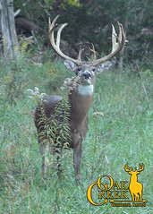 Beautiful Tall Buck (oakcreekhunt) Tags: whitetail whitetaildeer wwwoakcreekwhitetailranchcom worldrecordwhitetail whatgetsyououtdoors deer dsc deerhunting outdoor outdoors recordbookdeer sci sportear scenery