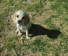 Arequipa - Molino de Sabandía (Santiago Stucchi Portocarrero) Tags: arequipa perú santiagostucchiportocarrero perro cane can dog hound chien sabandía cachorro perrito hund puppy