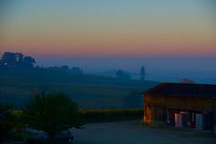 Vendanges tardives de 2016, en Sauternais, (patwillem) Tags: vineyards landscape morninglight colors autumn sauternes