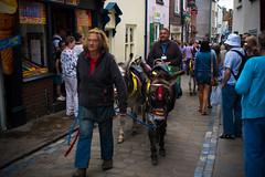 donkey (pamelaadam) Tags: whitby engerlandshire august summer 2016 holiday2016 animal donkey people lurkation digital fotolog thebiggestgroup