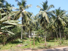 Villages Near Calicut Kerala Photography By CHINMAYA M (5)
