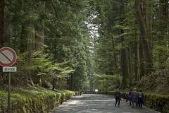 IMGP4921 (roughlegged) Tags: photography pentax k3ii apsc japan travel wanderlust forest woods nikko
