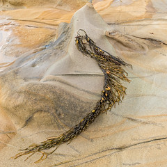 Sandstone And Seaweed (gecko47) Tags: sandstone rock weathered smooth weed seaweed caught rockshelf tide tidal exposed beach shallows kilcundabeach bassstrait coast kilcunda gippsland victoria naturalmaterials