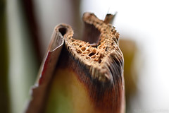 Snapped Branch (Bri_J) Tags: tropicalbutterflyhouse northanston sheffield southyorkshire uk yorkshire nikon d7200 butterflyhouse branch macro