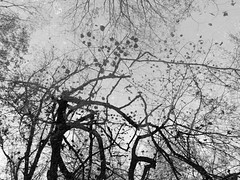 A World Of Madness (Rossdxvx) Tags: textured texture textures noir nature blackandwhite blight overlay minimalism metallic abstract surreal surrealism silhouette dark decay decaying outdoor outdoors bleak 2016 forest woods fall
